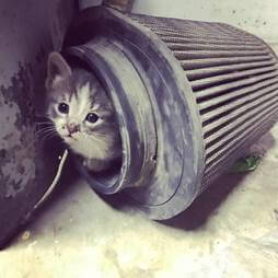 Kitten in air filter