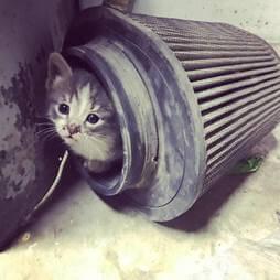 Kitten in air filter