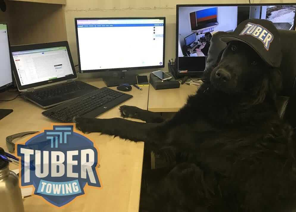 Dog Working at Desk Chair